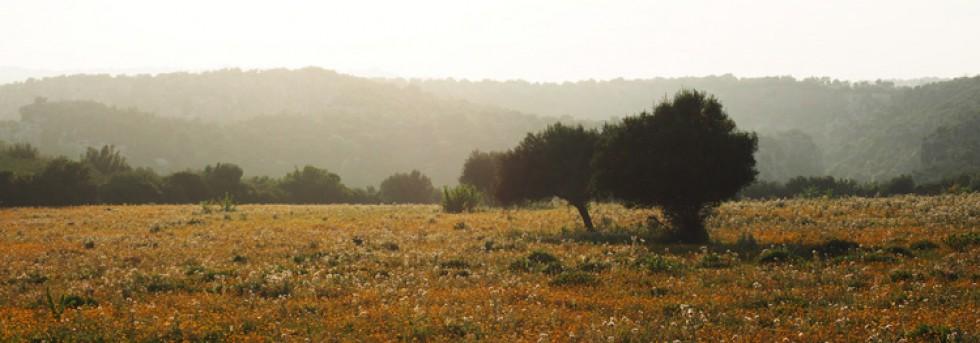 Frühling auf Sizilien