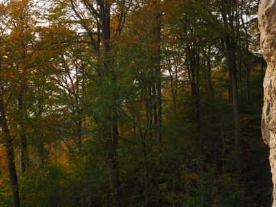 Holzen und Herbst