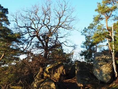 Langenstein – bouldern