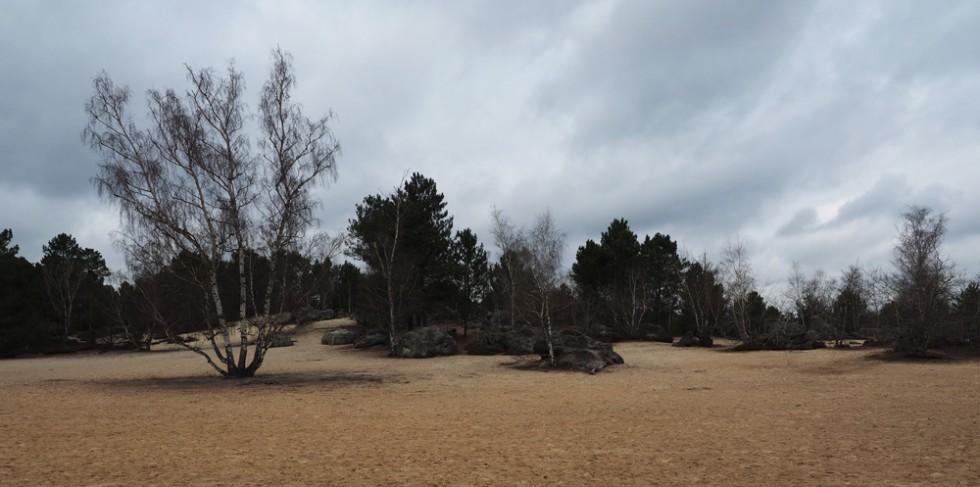Fontainebleau II