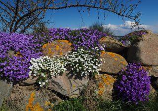 Steinmauer Fünen